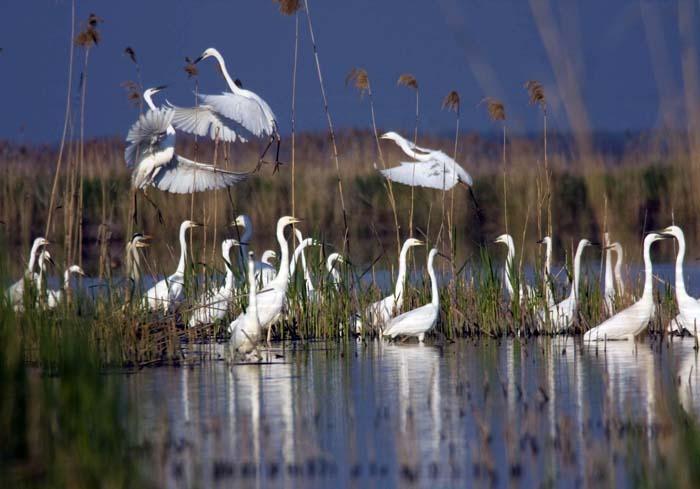Image result for parcul natural cefa