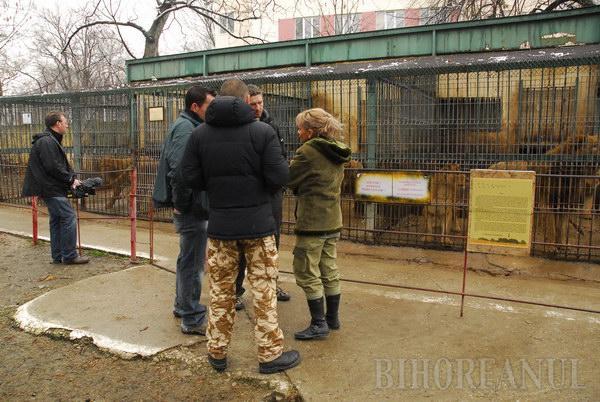 Jurnaliştii BBC, cu camerele pe leii orădeni