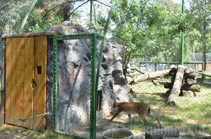 Zoo în creştere