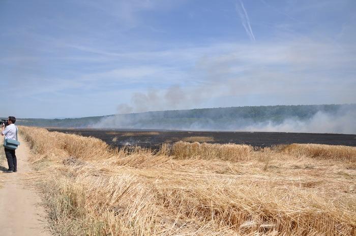 Iadul pe pământ! Cultură de orz, mistuită de flăcări în Husasău de Tinca (FOTO/VIDEO)