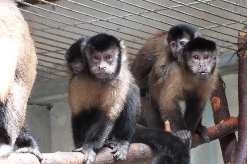 Sezonul puilor la Zoo Oradea: Peste 50 de animăluțe s-au născut la Grădina Zoologică de la începutul anului (FOTO)