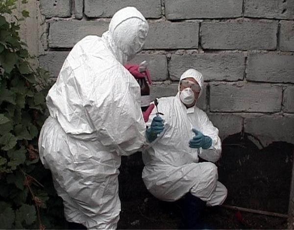 Alertă în Arad, Timiş şi Caraş-Severin, din cauza unei epidemii de antrax în Serbia