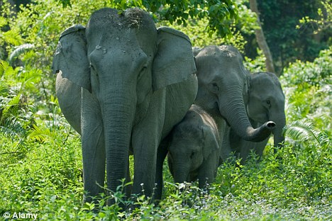 50 de elefanţi beţi au devastat un sat din India