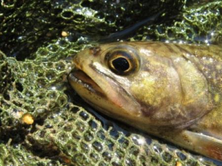 Patru braconieri au fost prinşi pescuind cu o plasă de 300 metri