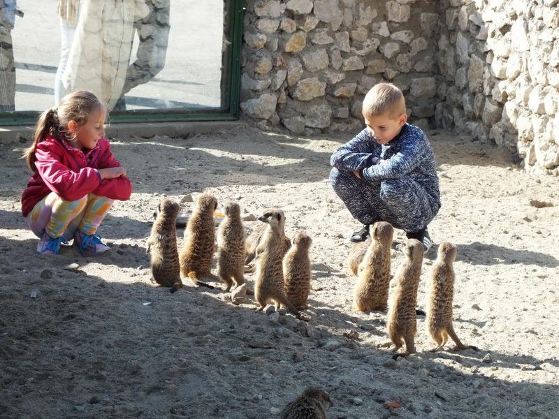 Ziua părinţilor adoptivi, la o nouă ediţie: Sâmbătă, 6 octombrie, la Grădina Zoologică Oradea (FOTO)