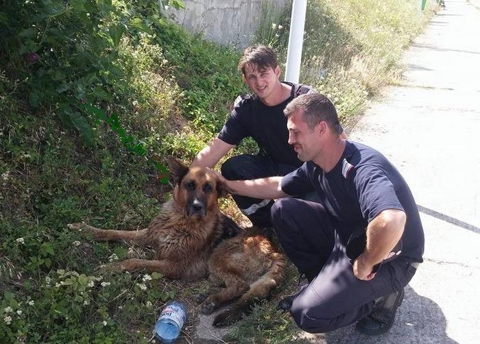 L-au salvat pe Grivei! Un câine blocat în Crişul Repede a fost scos în siguranţă de pompieri