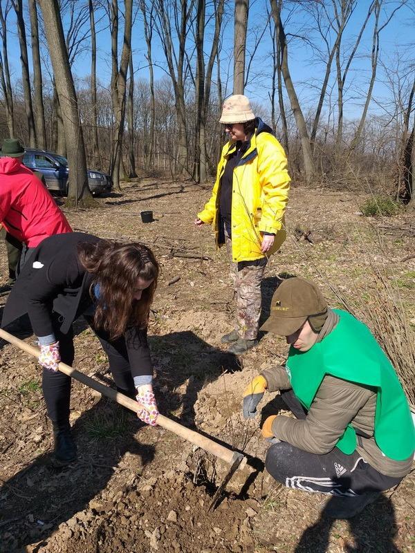 Luna plantării arborilor: Direcţia Silvică Bihor va împăduri 173 de hectare, în această primăvară (FOTO)