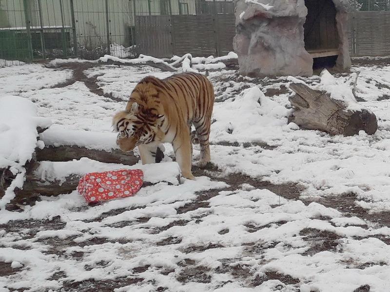 Zi festivă la Grădina Zoologică din Oradea: Au şi animalele Crăciunul lor (FOTO)