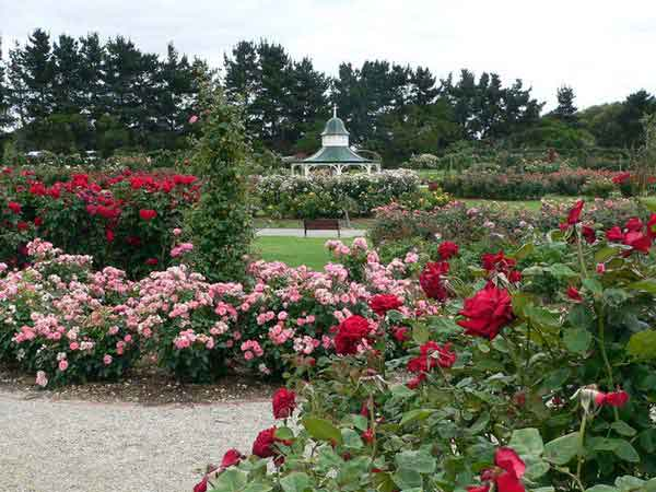 09-rose-garden.jpg