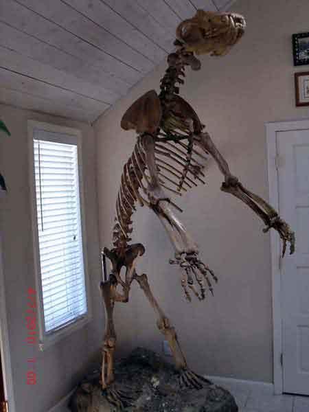 14-schelet.jpg