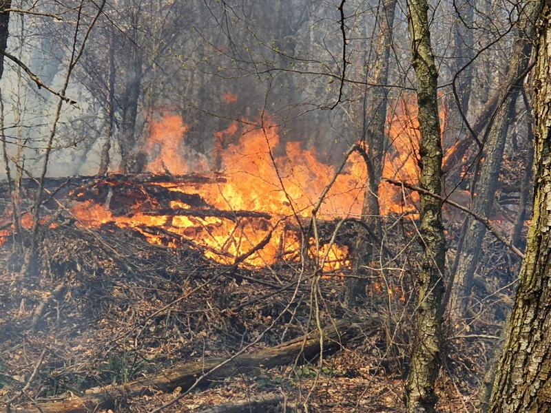 Incendiu vegetaţie